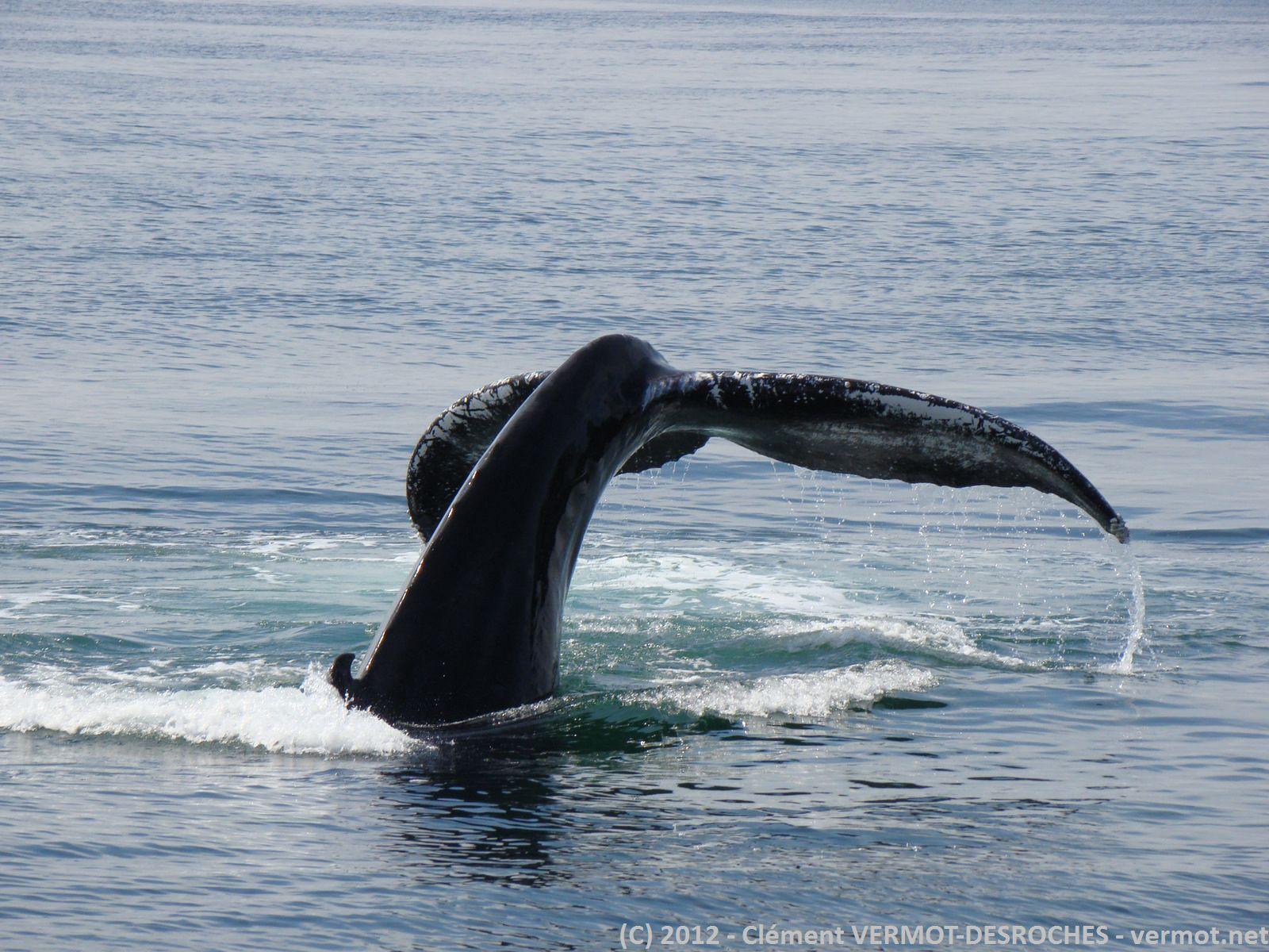 Oh, une baleine !